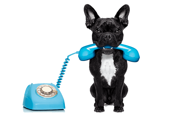 contact pet express sri lanka