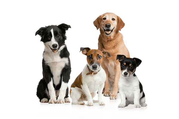 Certified Pet Relocation Specialists