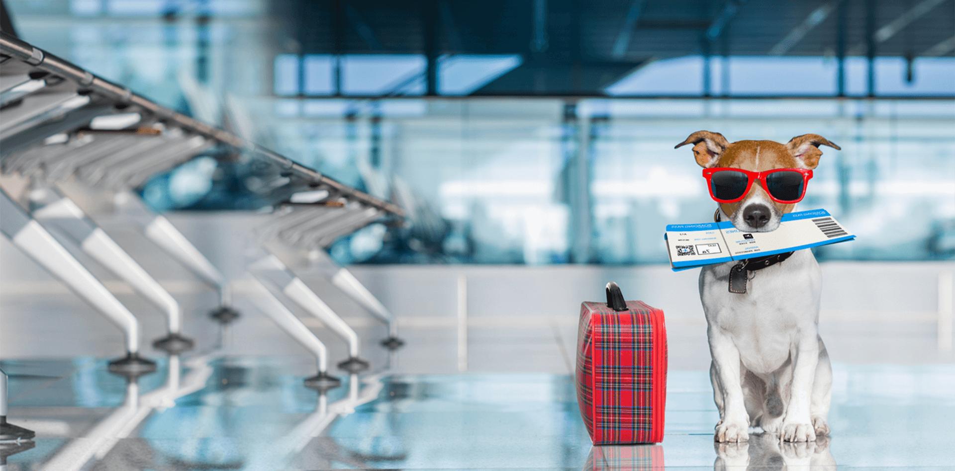 international pet travel specialists pet express