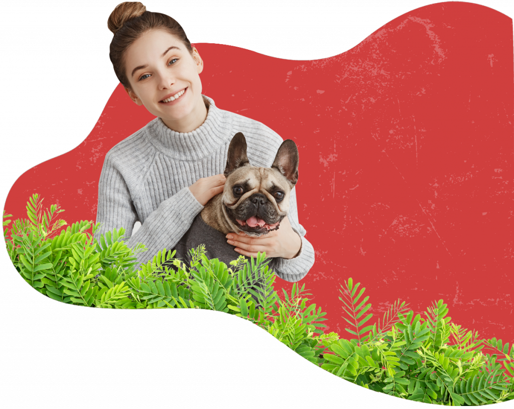 Pet Express | International Pet Transport Specialists | Pet Travel Agency | Pet Shipping Services | Pet Relocation Company